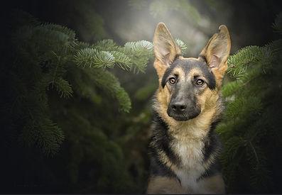 Dog-in-trees.JPG