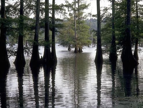 louisiana-swamp.JPG