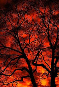 Elm tree in winter sunset.JPG