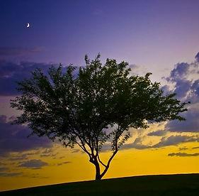 TwilightPsalm-tree.JPG