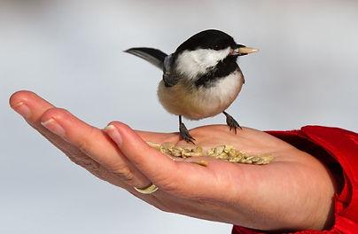 feeding-bird.JPG