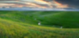 Field-of-green-with-stream.JPG