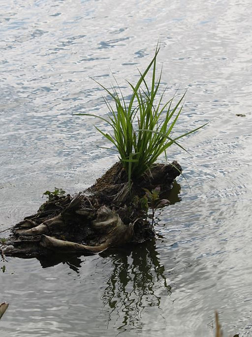 Lake Martin - stump with plant on it-scenic.JPG