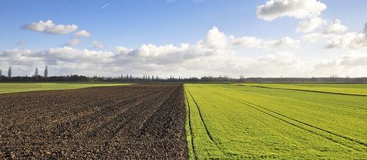 fertile plains.JPG