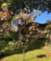 Tallow-in-fall.jpg