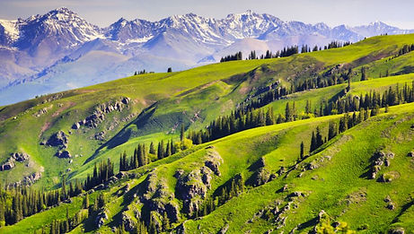 meadow-and-mountains.JPG
