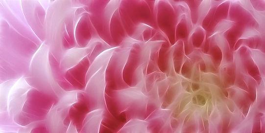 flower-pink.JPG