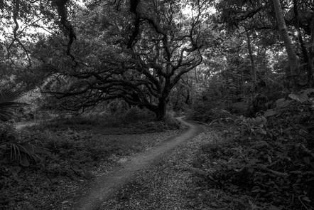 Noir Trail
