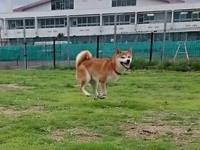 飛翔犬!飛翔犬!?飛翔犬・・・