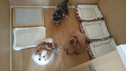 小型犬3頭でも余裕でオッケー