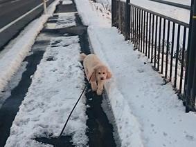 冬です!パート2