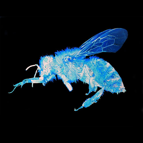 Humble Honey Bee Inverted Print