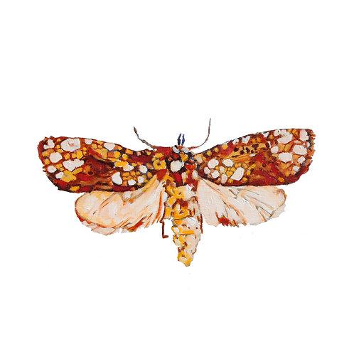 The Crackling Moth