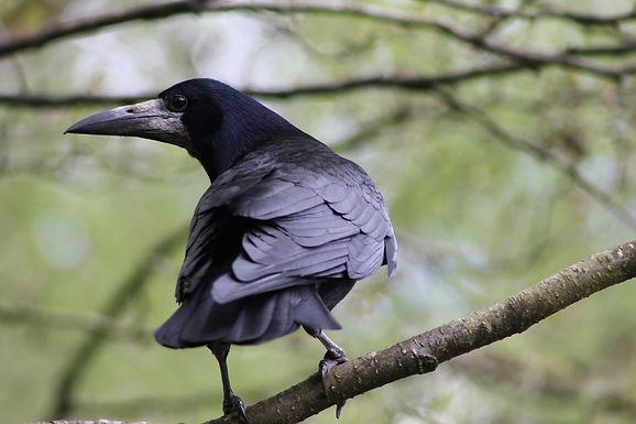 bird-5132802_1920.jpg