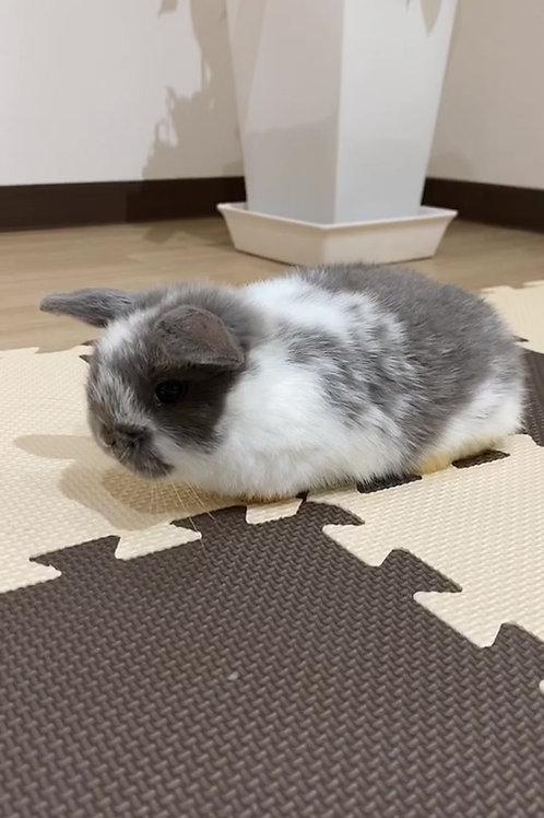 💛お迎えがきまりました💛動画