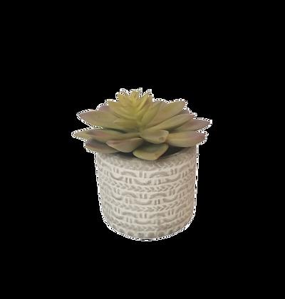 Sm Succulent