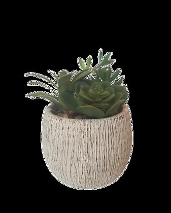 Med Succulent
