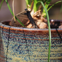 Photo d'un pot de fleurs
