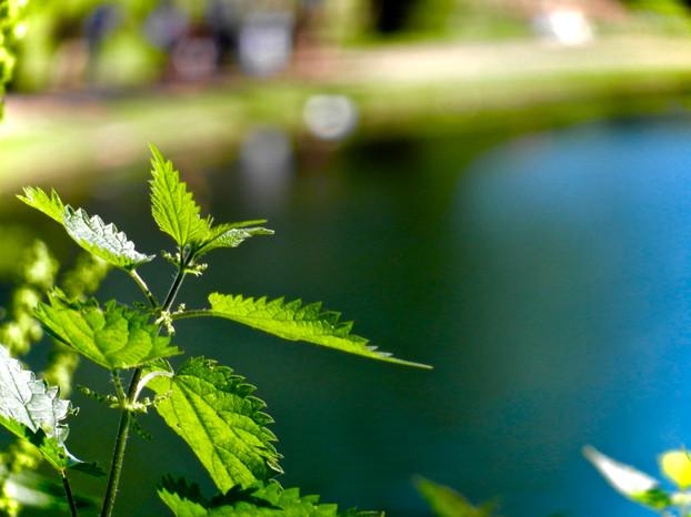 Image shot on Nikon CoolPix S9100 2012