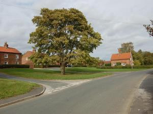 Our village green now