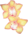 Orchid%20Flowers_edited.png