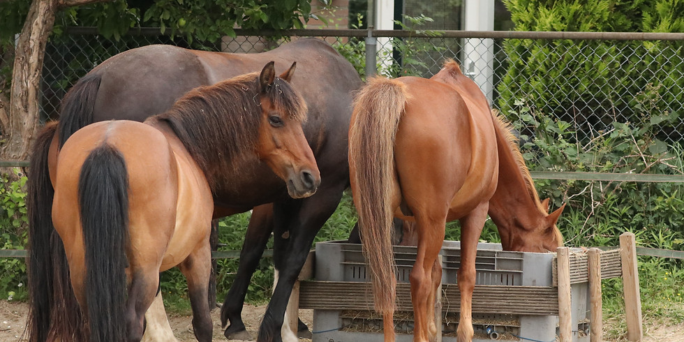 Ponykamp 11-