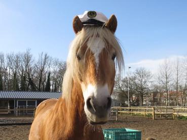 Pimp je pony