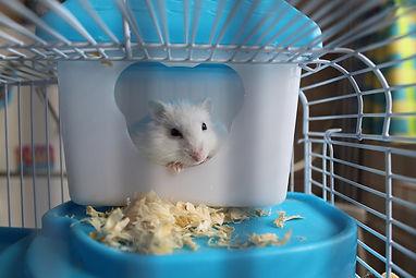 hamster-2724477_1920.jpg