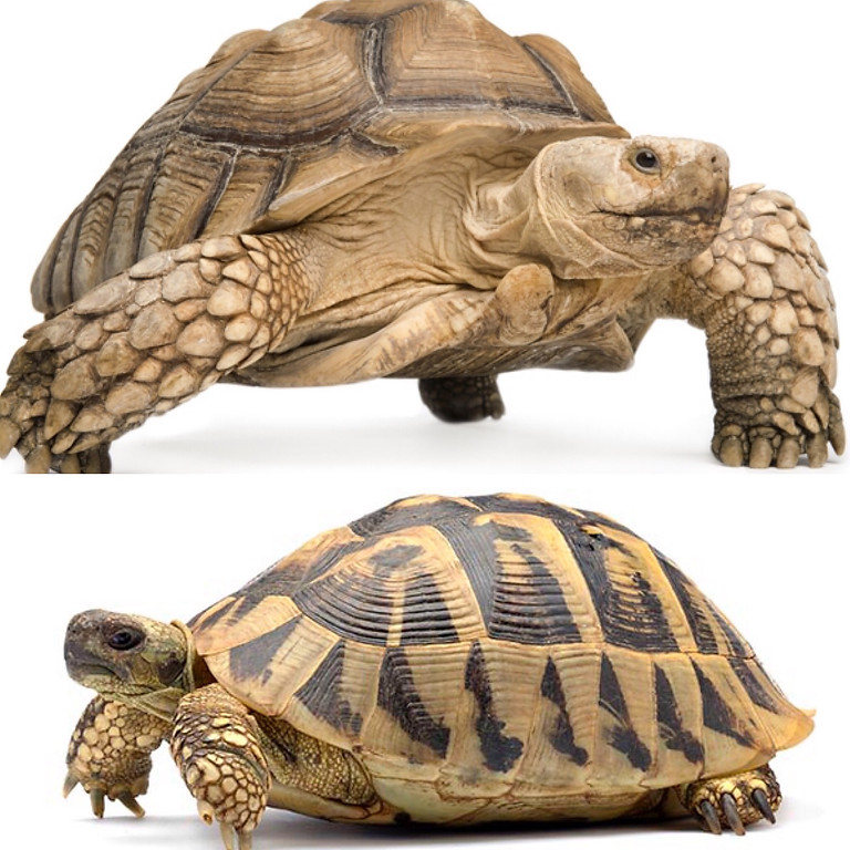 Formation Tortues terrestres