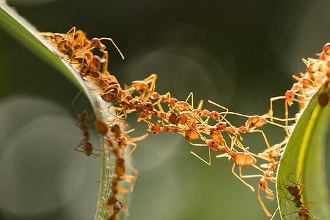 Ant action standing.Ant bridge unity tea