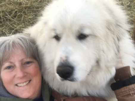Love this girl... my big white fluffy pillow when a break is needed. Anastasia, Tazia, keeps everyon
