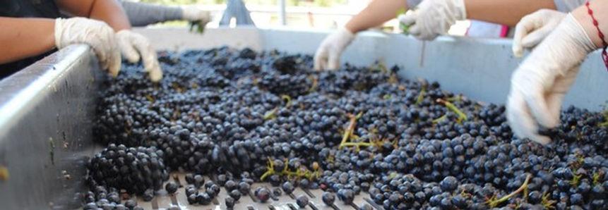 617_left_winemaking.jpg