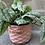 Thumbnail: Support Plant Parenthood