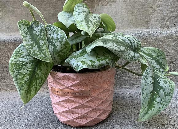 Support Plant Parenthood