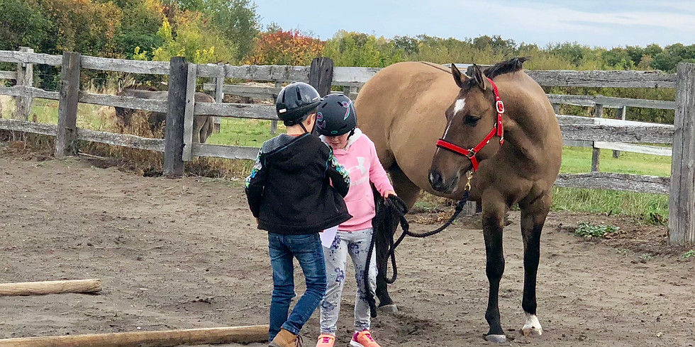 Equine Assisted Learning - Summer Camp
