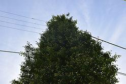 125._photo_ligne_dans_végétation_.jpg