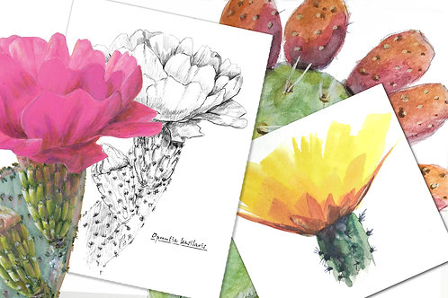 Nature Journaling: The Prickly Art of Drawing Cactus (July 20)