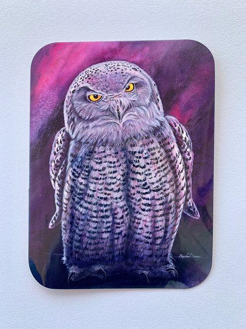 Snowy Owl Sticker by Rachel Ivanyi