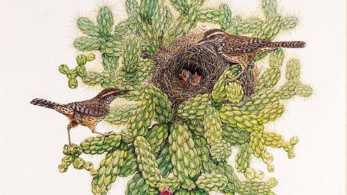 Cactus Wren Poster by Gary J. Dixon