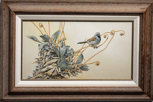A Study in Grey: Black-throated Sparrow and Encelopsis by Sharon Schafer