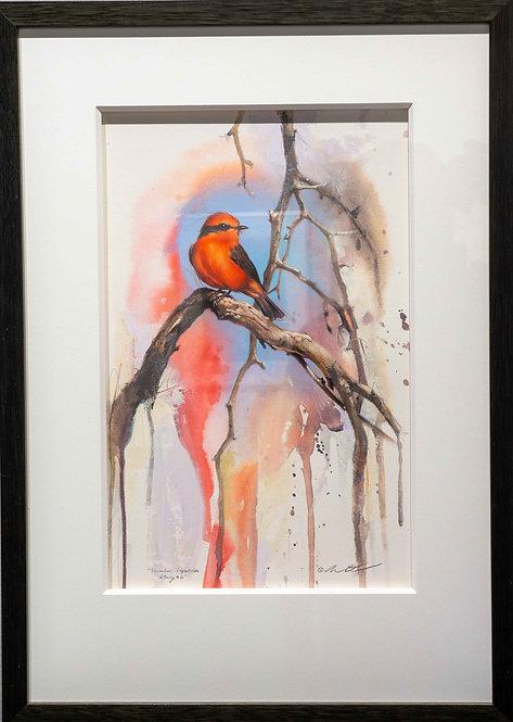Vermilion Flycatcher Study #2 by Andrew Denman