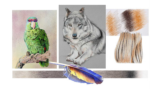 Fur & Feathers in Colored Pencil