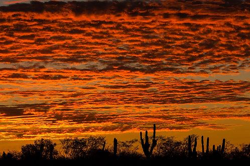 Desert Sunrise by Carlos Navarro