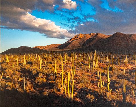 Saguaro Sunrise by Jay Pierstorff