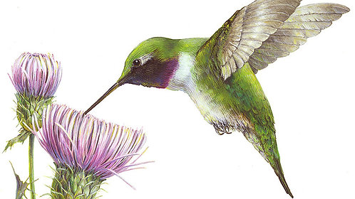 A Charm of Hummingbirds: Painting Hummingbirds in Gouache and Watercolor