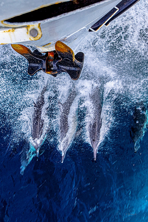 Dolphins Riding the Waves by Pilar Salido