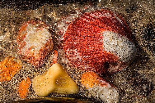 Shells and Water by Pilar Salido