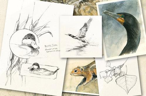 Journaling in Nature: Graphite & Watercolor (June 1)