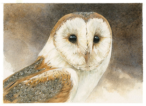 A Parliament of Owls: Gouache & Watercolor