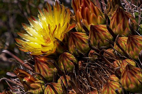 Loreto Blooming by Pilar Salido